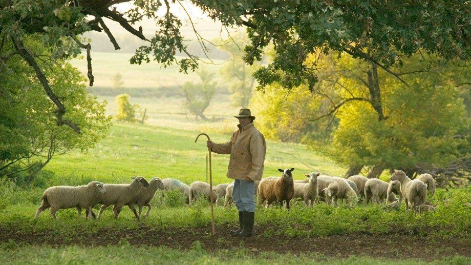 Shepherds Way Farm Steven in field