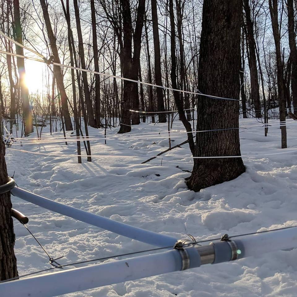 Horner's Corner Maple Trees Maple Season