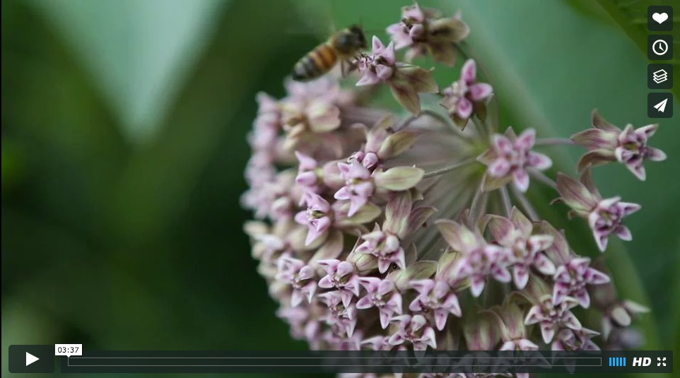 Ames Farm Video Link