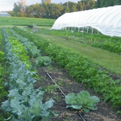 Solar Fresh Produce Next Stage Grant