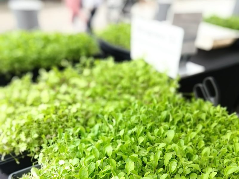 Microgreens Holistic Health 2019