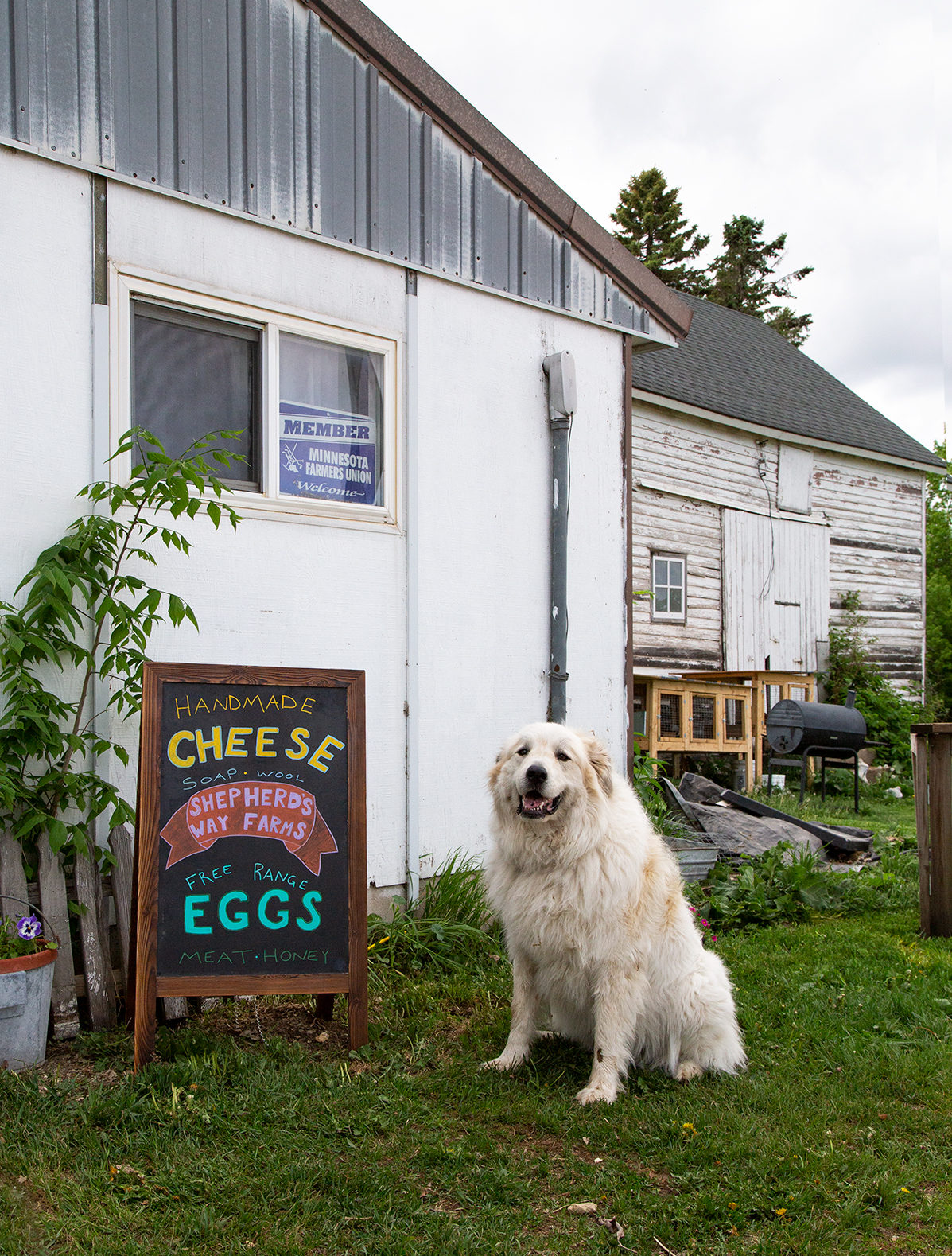 Dog and Cheese Sign at Shepherd's Way Farms