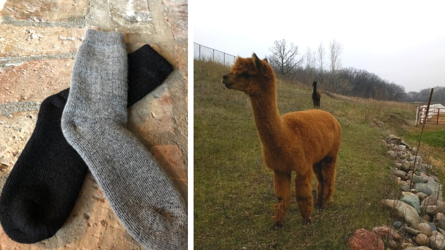 The Abbey Socks 2020 Gift guide