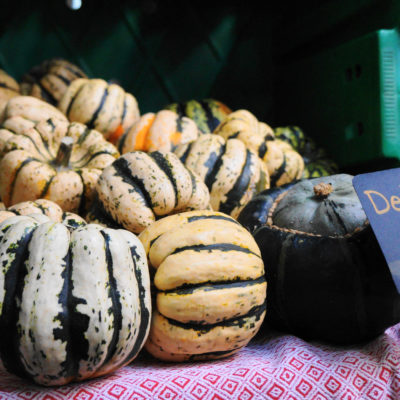 Delicata Squash Mill City Farmers Market