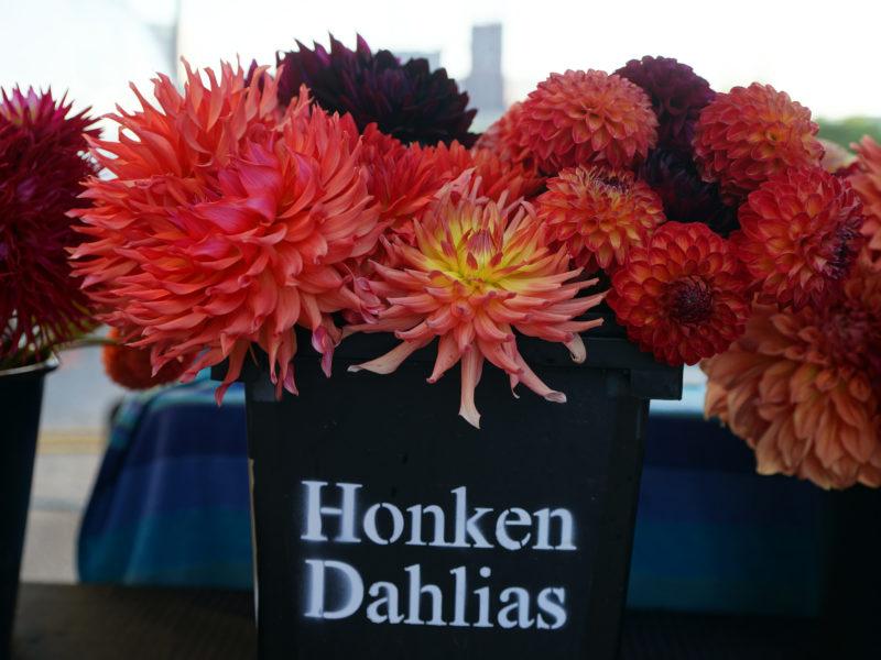 Honken Dahlias