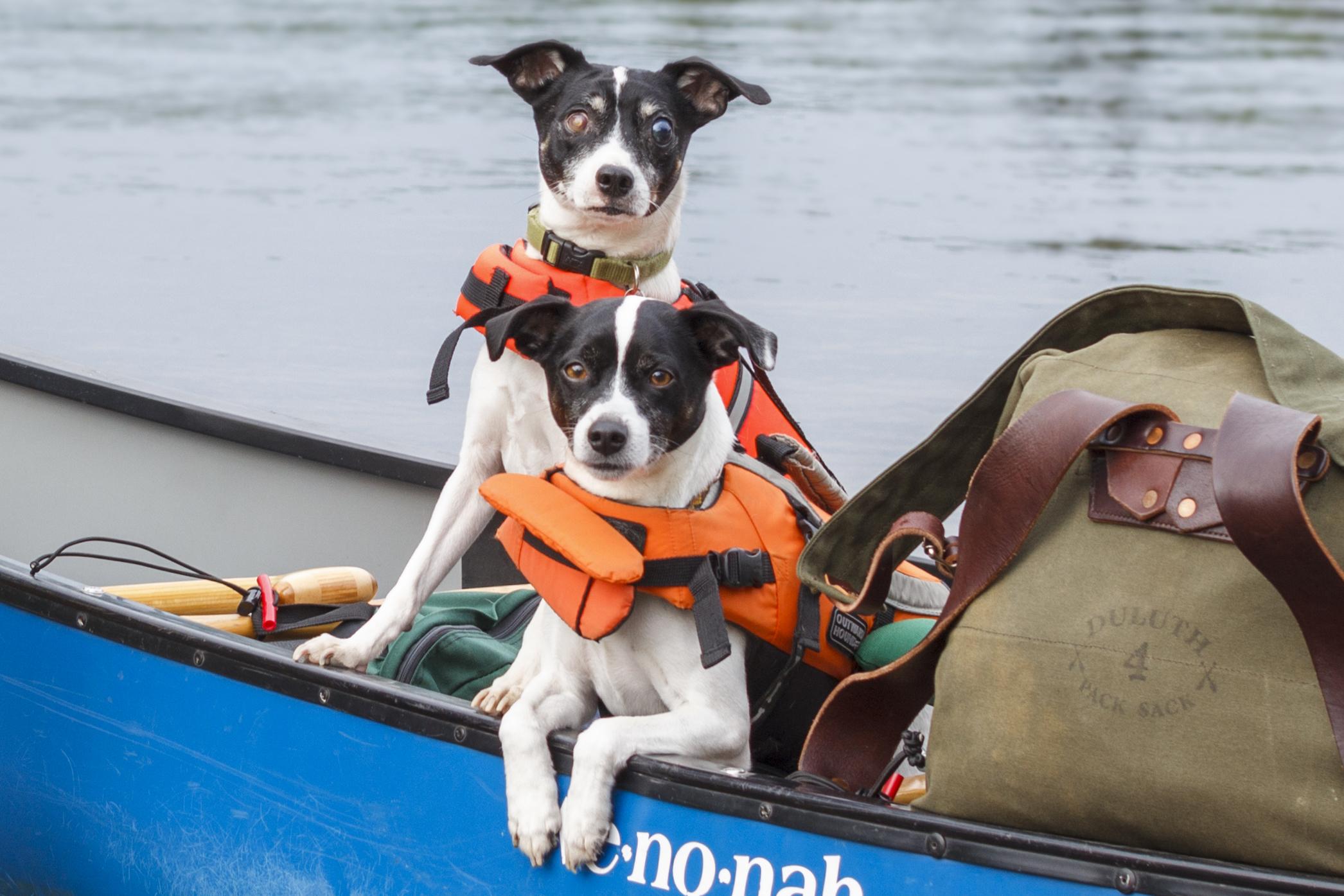 Double Dog Kombucha Mac and Otey