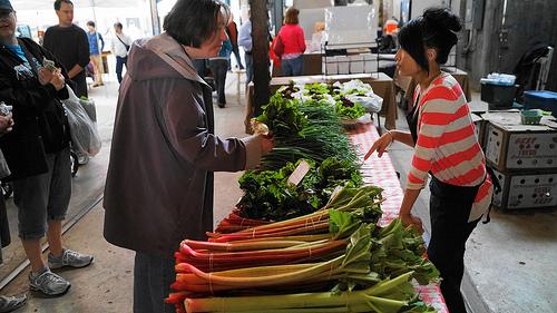 Rhubarb SNAP groceries