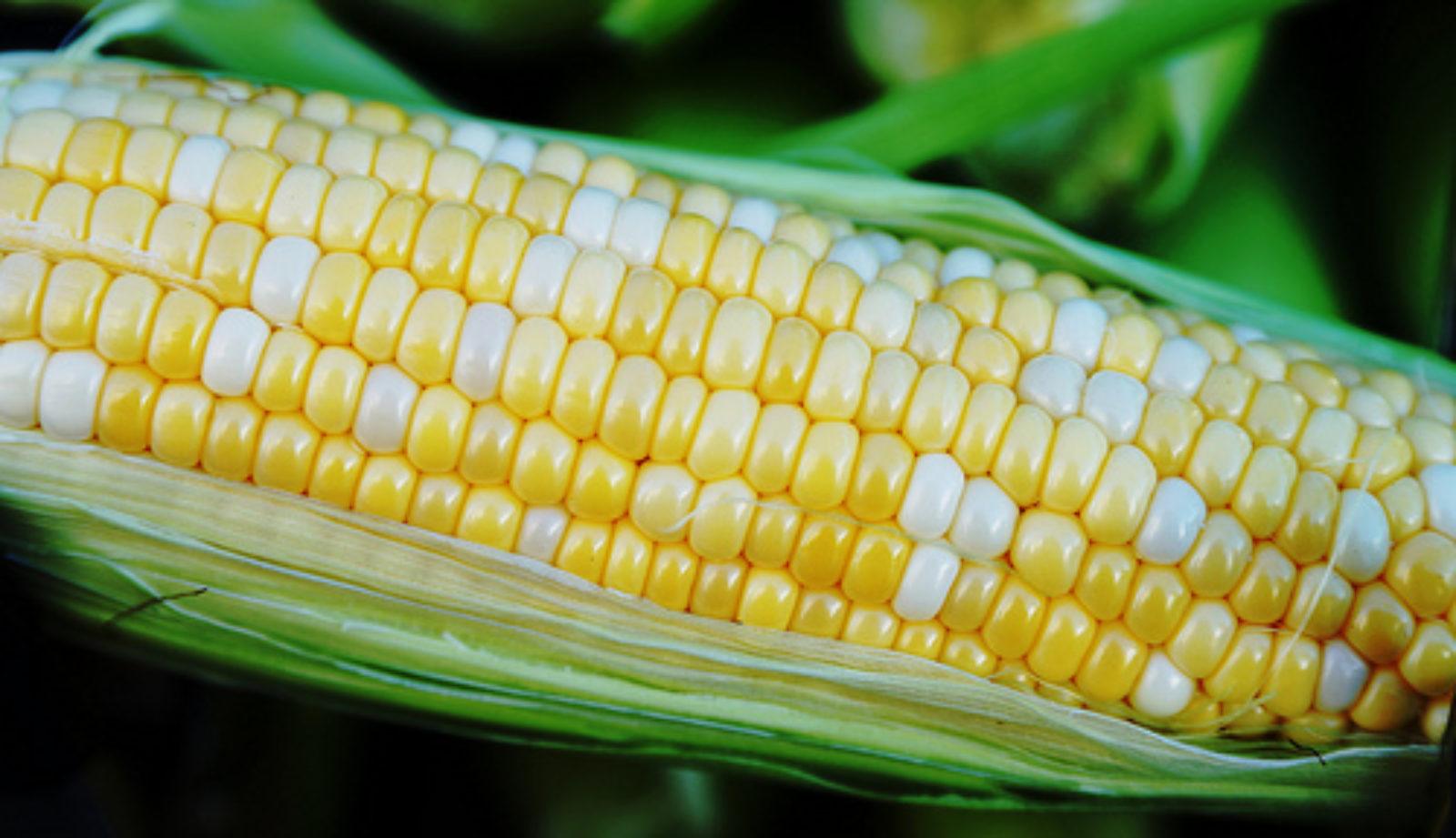Nistler Farms sweet corn